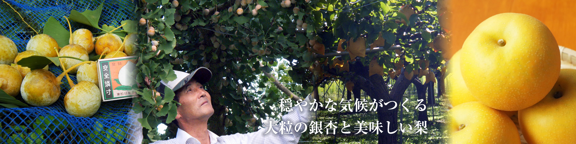 鳥取廣信青果有限会社